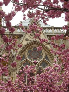 Gothic Church and Blossoms