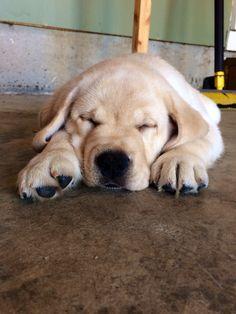 Sleepy puppy...