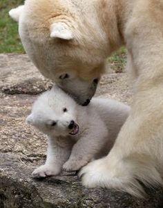 Twin polar bear cubs