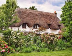 Top 10 Most Peaceful Cottages - Cottage in Hampshire   (9)
