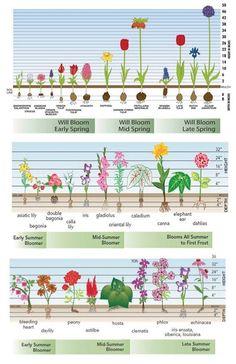 Время цветения цветов — календарь садовых растений | Мои Идеи Для Дачи