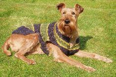 mick the irish terrier