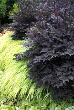 this is the perfect juxtaposition of light and dark in the garden. Actaea 'Black Negligee' with the Japanese forest grass Hakonechloa macra 'All Gold' Garden Shrubs, Shade Garden, Garden Landscaping, Landscaping Borders, Landscaping Ideas, Landscape Design, Garden Design, Garden Playhouse, Black Garden