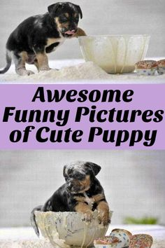 Awesome Funny Pictures of Cute Puppy Cute Puppy Pictures, Funny Animal Pictures, Funny Animals, Life Memes, Cute Puppies, Weird, Funny Memes, Pets, Awesome