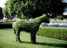 Topiary is the art of trimming, training and shaping trees, shrubs and plants into specific shapes that are elegant, artistic or whimsical. While a row of perfectly shaped. Outdoor Topiary, Topiary Plants, Topiary Garden, Topiary Trees, Outdoor Statues, Moss Garden, Outdoor Decor, Outdoor Landscaping, Potted Plants
