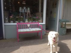 Molly outside the shop. Summertime window display x www.facebook.com/maisonmoli Summertime, Toddler Bed, Window, Display, Facebook, Pictures, Shopping, Home Decor, Child Bed