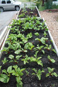 Starting a garden tips!