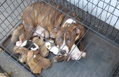 Smell of feces reveals animal cruelty situation in Arkansas.  With a rescue now.  Fosters desperately needed.