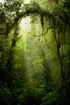 Végétation/nature à l'état sauvage