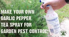 Need something natural, yet effective, to kill off the bugs that are eating all of your garden crop? Try this Garlic Pepper Tea Spray from MomwithaPREP.com