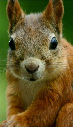 One Eyed Cat, Red Squirrel, Bear Cubs, Rodents, Chipmunks, Beautiful Birds, Animal Photography, Pet Birds, Cool Photos