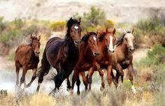 Resultado de imagem para horses