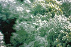 tapisserie  Elodi Bernadet, coussins verdure explosée