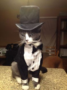 The Most Stylish Cat You'll Ever See