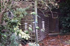 The parakeets are back in town Parakeets, Spaces, Plants, Parakeet, Planters, Plant, Planting, Parrots