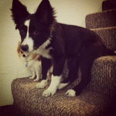 Haha just sitting around - @megmayne- #webstagram  neighbor doggies foxy & storm