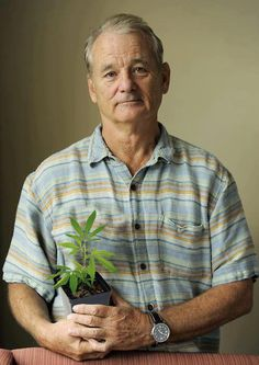 Bill Murray with cannabis plant.
