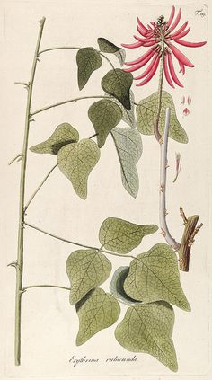 n210_w1150 by BioDivLibrary, via Flickr