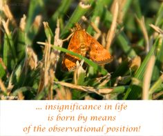 ... #insignificance in life is born by means of the observational position!