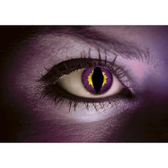 Purple lizard contacts