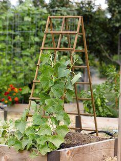 garden trellis miniature pumpkins | Kitchen Garden Trellis
