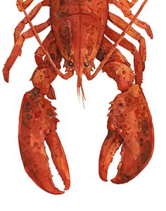 red lobster print