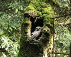Old tree ...