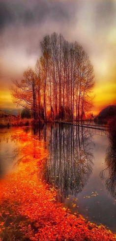 Natur Bäume Wasser Sonnenuntergang