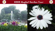 FREE Visit to Mughal Garden, Rashtrapati Bhavan Tourist Spots Audio Commentary Air Conditioned Flexible Boarding Free Tour Guide App Customer Support 499 530 Listed in Official website of India& Ministry of Tourism Official H Delhi Tourism, Sightseeing Bus, Tourist Spots, Customer Support, Tour Guide, Ministry, Audio, Tours, App