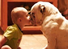 This baby-bulldog butterfly kiss.- This baby-bulldog butterfly kiss. WARNING: These pictures are guaranteed to make you melt. Do NOT look if you don& want to be reduced to a puddle of aww. Love My Dog, Puppy Love, Puppy Pics, Animals For Kids, Baby Animals, Funny Animals, Cute Animals, Funny Cats And Dogs, Cute Dogs