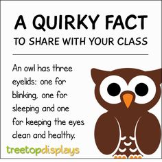 A quirky fact about owls to share with your class - from Treetop Displays. Visit our TpT store for printable resources by clicking on the provided links. Designed by teachers for Pre-Kindergarten to Grade. Fun Facts For Kids, Fun Facts About Animals, Animal Facts, Wtf Fun Facts, Fun Facts About Fall, Owl Preschool, Preschool Science, Owl Activities, Preschool Activities