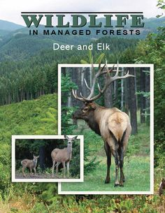 Wildlife in managed forests : deer and elk, by the Oregon Forest Resources Institute