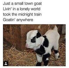 Goatin' anywhere