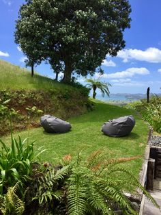 New Zealand - Coromandel - Whitianga