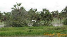 Esteros de Camaguan en Guarico, Venezuela. El paraiso del llano Venezolano.