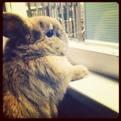 Bunny in Window Photo by kcartyphotography on Etsy