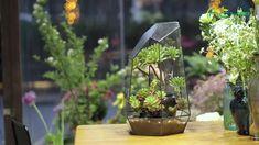 geometric  terrariums Terrarium Containers, Glass Terrarium, Terrariums, Small Potted Plants, Air Plants, Planter Ideas, Ceramic Planters, Floating Frame, Plant Holders