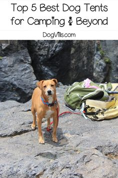 If you're looking for the best dog tents, I've got you covered (literally)! Check out our top five favorites for camping, beach days, and even indoor use! Dog Tent, Outdoor Dog Bed, Sun Dogs, Cute Dog Collars, Dog Training, Training Tips, Dog Accessories, Dog Care, Dog Friends
