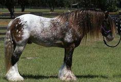 Image result for strange colored horses