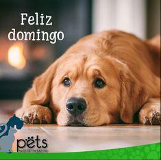 Feliz domingo ☀️  #PetsWorldMagazine #RevistaDeMascotas #Panama #Mascotas #MascotasPanama #MascotasPty #PetsMagazine #MascotasAdorables #Perros #PerrosPty #PerrosPanama #Pets #PetsLovers #Dogs #DogLovers #DogOfTheDay #PicOfTheDay #Cute #SuperTiernos