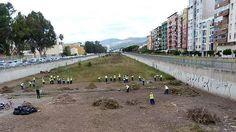 Cuadrilla de trabajadores en labores de limpieza en el cauce del Guadalmedina (archivo).