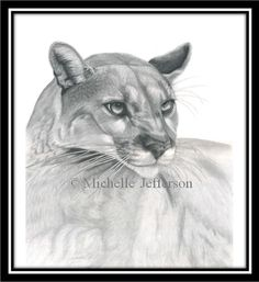 THE SENTINEL Cougars are a solitary and strongly territorial hunter. Normally cougars are very elusive and people rarely get more than a brief