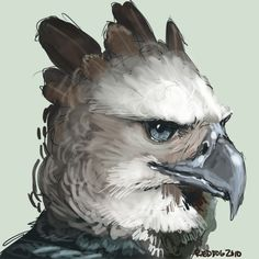 Harpy Eagle Drawing.
