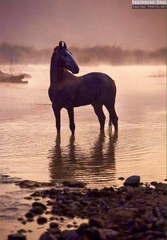 equine photography — themotherfuckingclickerkid: I just wanna look at. Marwari Horses, Friesian Horse, Cute Horses, Beautiful Horses, Horse Art, Horse Horse, Well Images, Names Of Artists, Horse Silhouette