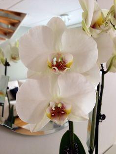 15.3. Äidin ostama orkidea.