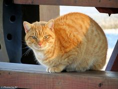 Park Cat. - http://www.1pic4u.com/blog/2014/10/03/park-cat/