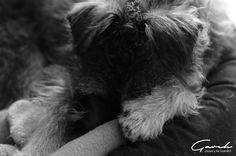 #wheezy #mutt #resting