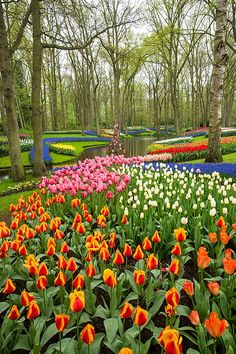 Keukenhof Gardens, Amsterdam, Netherlands. If you go to Holland....this place is a MUST SEE! Absolutely breathtaking. I cannot wait to see this in person some day!