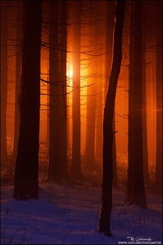 Sunforest - Bavaria by Radomir Jakubowski / 500px