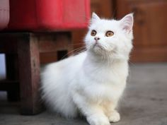 """Der beliebteste Katzenname war 2012 """"Lilly"""" mit """"y"""" am Ende    www.einfachtierisch.de"""
